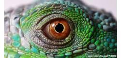 кружка 23февраля-028