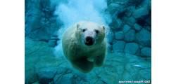 treeV_290