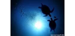 fresco_1408