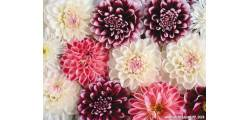 floralPP_0128