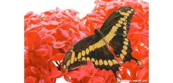 floralPP_0144