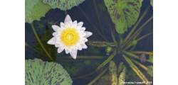 floralPP_0149