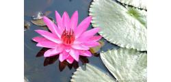 floralPP_0161