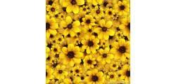 floralPP_0163