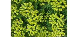 floralPP_0164