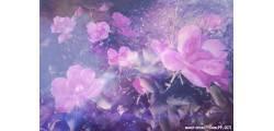 floralPP_0171